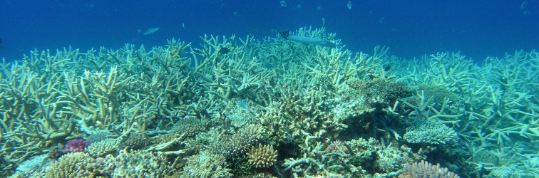 Climate 'causing huge changes in ocean life'