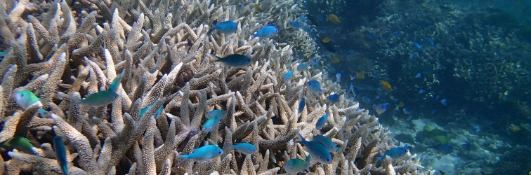 Historic coral collapse on Great Barrier Reef